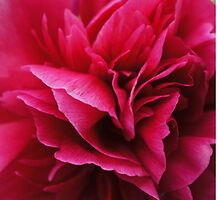 Pink Layered Flower by SherlockReader1