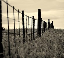 fence in the tall grass by Gideon du Preez Swart