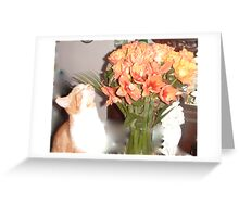 For a laugh Greeting Card