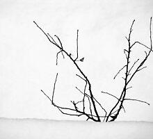 winter wonderland by faithie