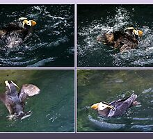 Puffin paddle by missmoneypenny