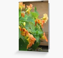 Edible Flowers Greeting Card