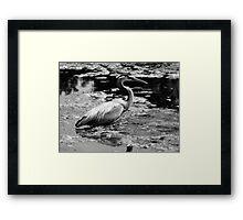 Blue Heron Black&White Framed Print