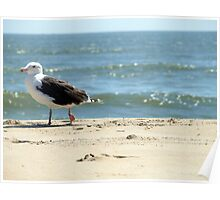 Gull Stroll Poster