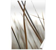 reeds Poster