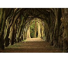 Cloister at Gormanston College Photographic Print