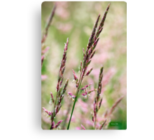 Pink Grass Abstract Canvas Print