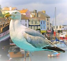Gull on Guard by missmoneypenny
