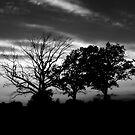 Sunset Black&White by TLWhite
