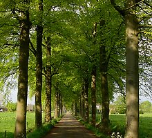 A Dutch country road in May by jchanders