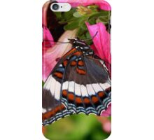 White Admiral Butterfly Art iPhone Case/Skin