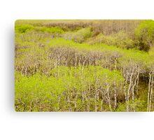 Spring Foliage. Canvas Print