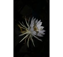 Queen of the Night #2 Photographic Print