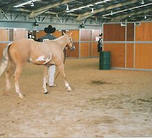 Paint Horse Nationals 2000 by louisegreen