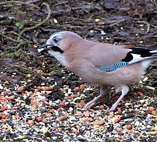 One Jay by Sharon Perrett