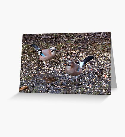 Two Jays Greeting Card