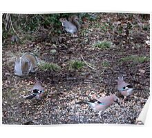Three Jays.............oh and two squirrels  Poster