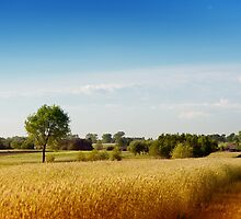 Rural wheat field view by Arletta Cwalina