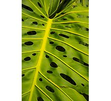 Hawaiian Monstera Deliciosa Leaf Photographic Print