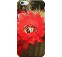 Flowering Cactus iPhone Case/Skin