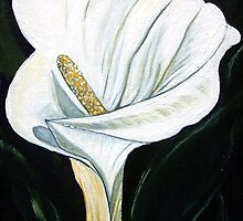 Calla Lily  by Linda Callaghan