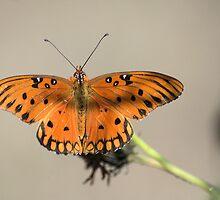 Wings Spread Wide by Donna Adamski