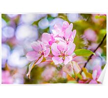 Pink Apple Blossom Poster