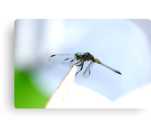 Perched Blue Dasher Dragon Canvas Print
