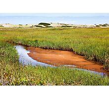 Green grass landscape Photographic Print