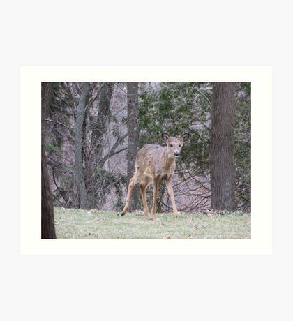 Okauchee Lake Deer Art Print