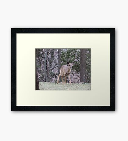 Okauchee Lake Deer Framed Print