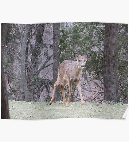 Okauchee Lake Deer Poster