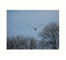 Seagull Over Trees Art Print