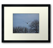 Seagull Over Trees Framed Print
