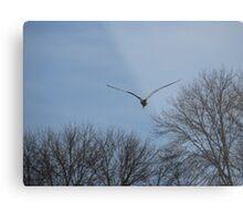 Seagull Over Trees Metal Print