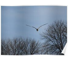 Seagull Over Trees Poster