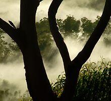 """Through the Branches"" by debsphotos"