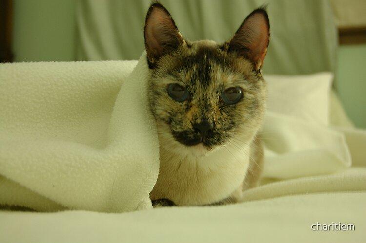Fancy Cat by charitiem