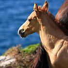 Colt By The Sea by aidan  moran