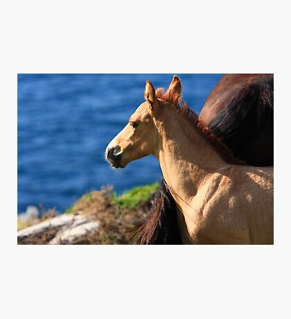 Colt By The Sea Photographic Print