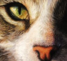 Fidget - Realistic Cat Portrait Fine Art Sticker