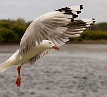 seagull by Overlander4WD