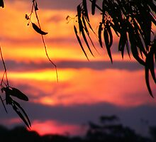 Bushfire sunset by Peta Hurley-Hill