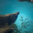 spot the dolphin by Kaimaha
