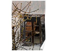 fig tree in winter Poster