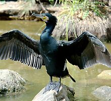Cormorant II by Tom Newman