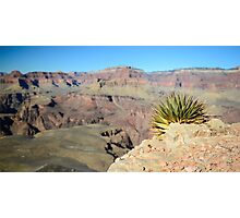 Utah Agave – Grand Canyon National Park, Arizona Photographic Print