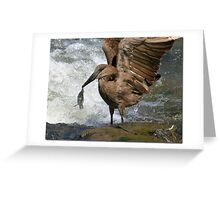 Hammerkop with lunch Greeting Card