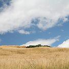 Grassy landscape and sky by ljm000