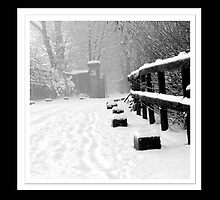 Snowy Lane by Stephen Knowles